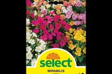 Mirabilis jalapa - Wunderblume