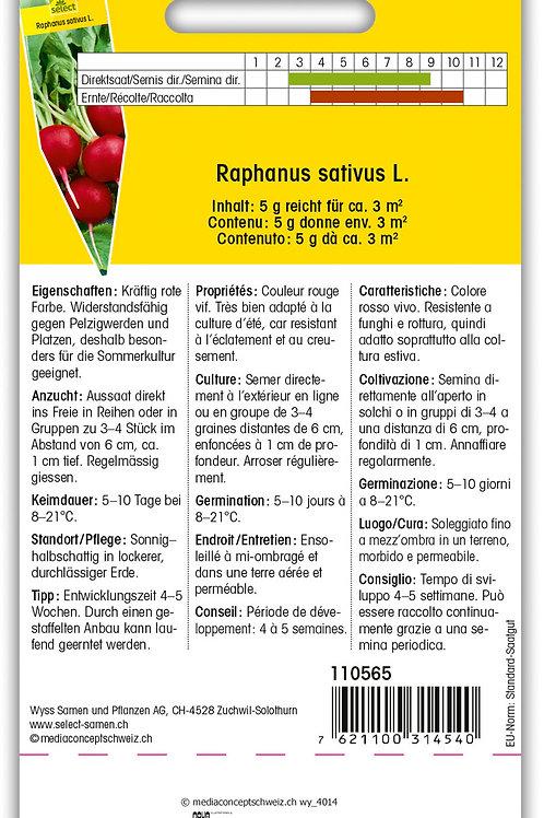 Radieschen 'Carnita' - Raphanus sativus