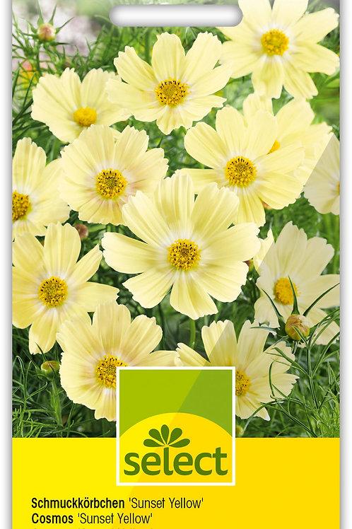 Schmuckkörbchen 'Sunset Yellow' - Cosmos bipinnatus