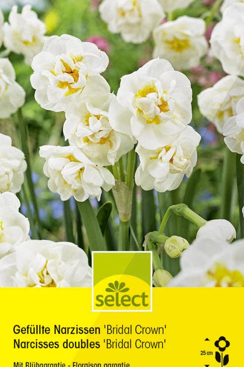 Gefüllte Narzissen 'Bridal Crown' - Narcissus