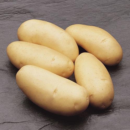 Saatkartoffeln 'Annabelle' 2.5kg