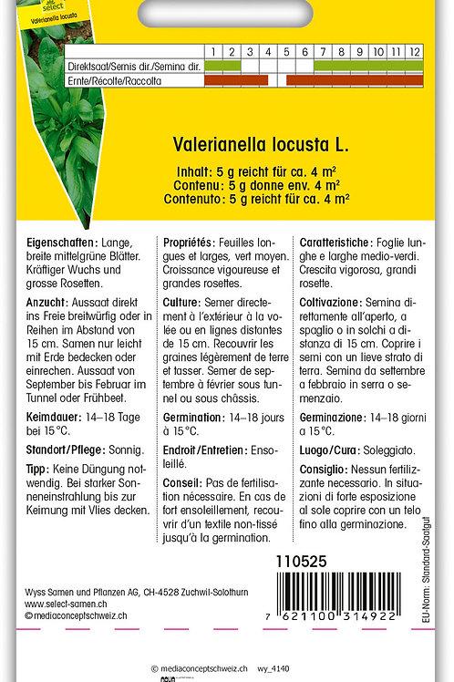 Nüssler 'Holländischer breitblättriger' - Valerianella locusta
