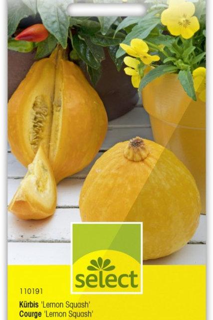 Kürbis 'Lemon Squash'
