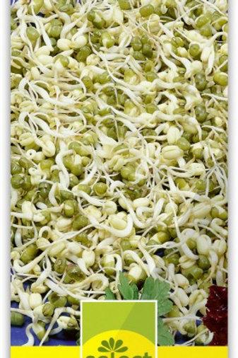 Keimlinge Soja (Mungbohnen)