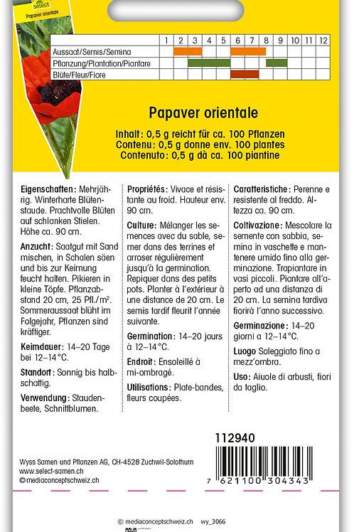 Orientalischer Mohn - Papaver orientale
