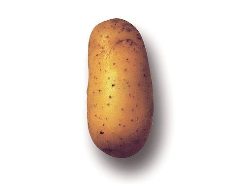 Saatkartoffeln 'Charlotte', 2.5 kg