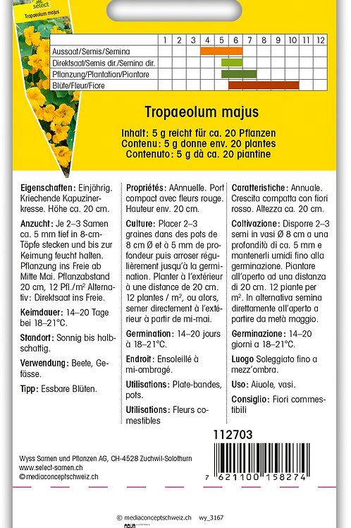 Kapuziner nieder 'Tip Top gold' - Tropaeolum majus