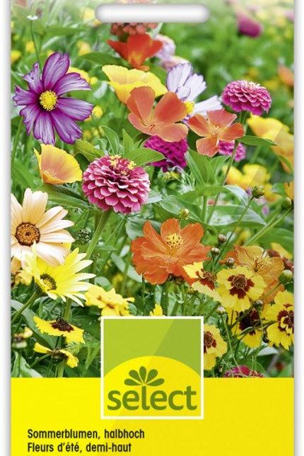 Sommerblumen, halbhoch