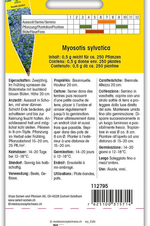 Vergissmeinnicht 'Indigo' - Myosotis sylvatica