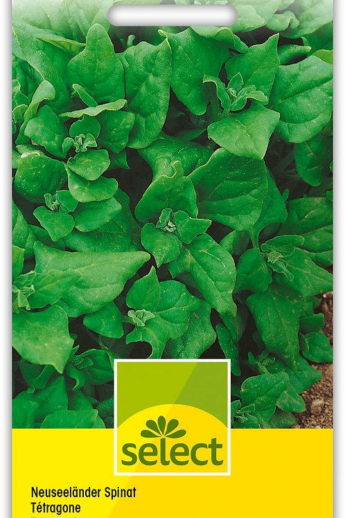 Neuseeländer Spinat - Tetragonia expansa