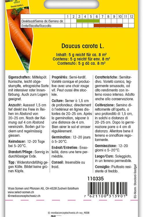 Karotte 'Rote Riesen' - Daucus carota