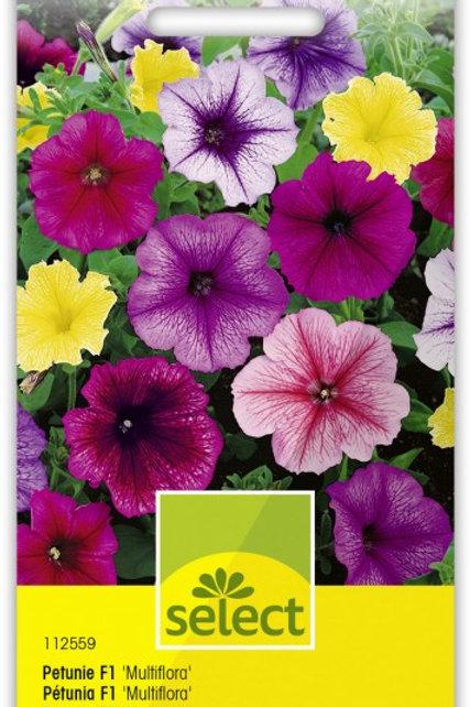 Petunie 'Multiflora F1', Mischung
