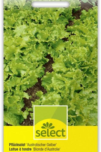 Pflücksalat 'Australischer Gelber'