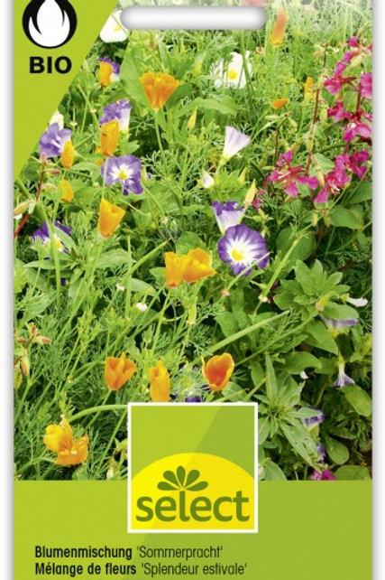 Blumenmischung 'Sommerpracht'