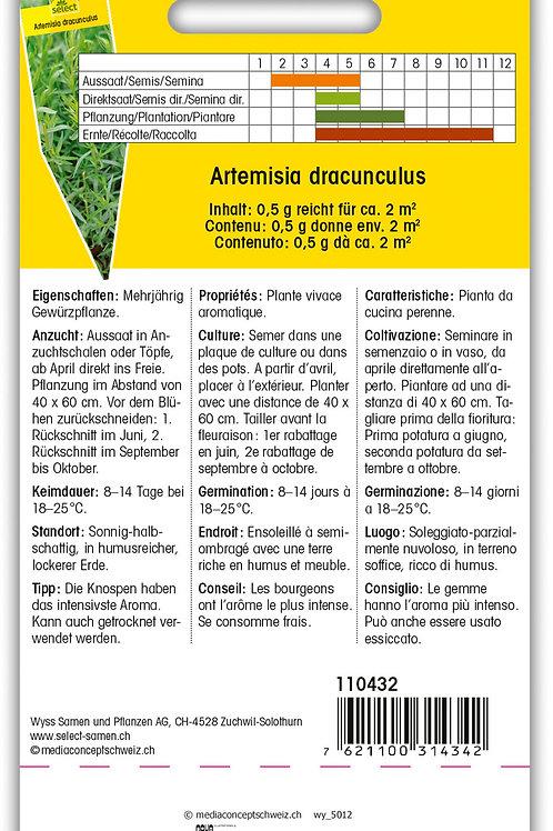 Estragon russischer - Artemisia dracunculus