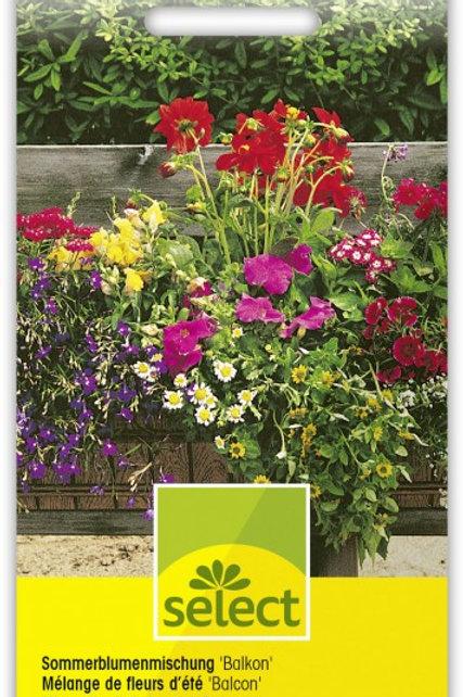 Sommerblumenmischung 'Balkon'