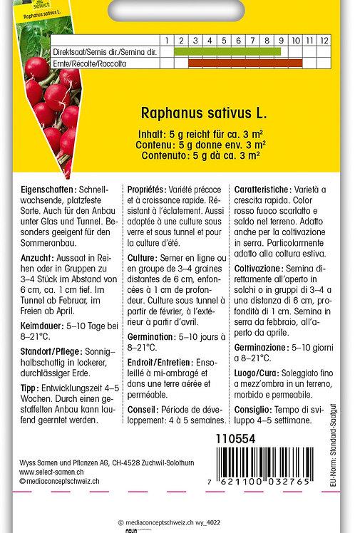 Radieschen 'Topsi' - Raphanus sativus