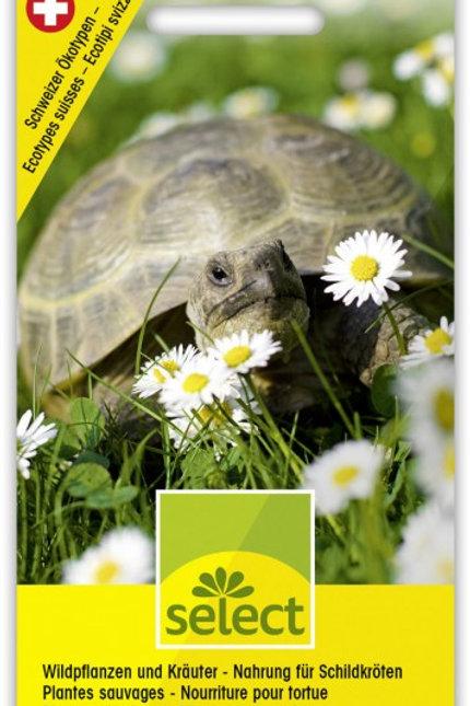 Wildpflanzen und Kräuter - Nahrung für Schildkröten