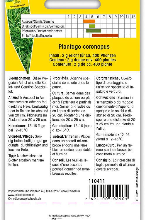 Hirschhorn-Salat 'Minutina' - Plantago coronopus