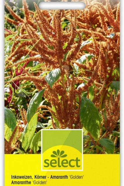 Inkaweizen, Körner - Amaranth 'Golden'