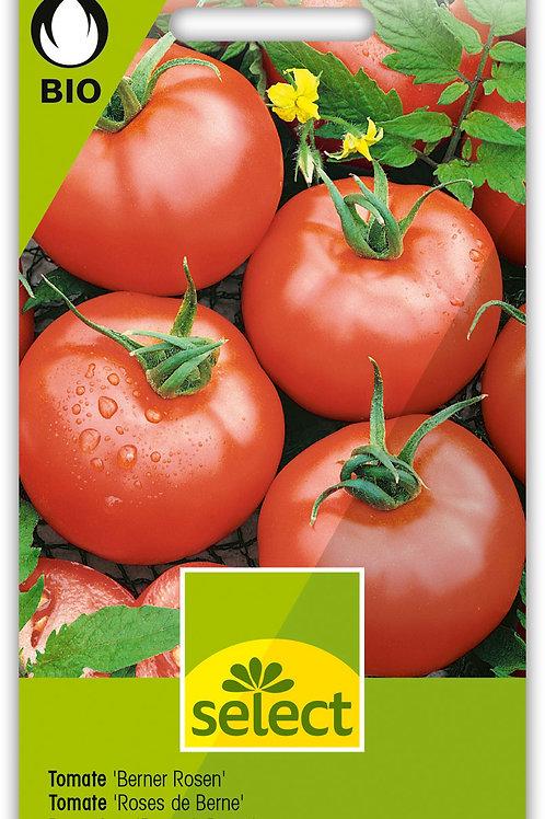 Tomate 'Berner Rosen' - Lycopersicon esculentum