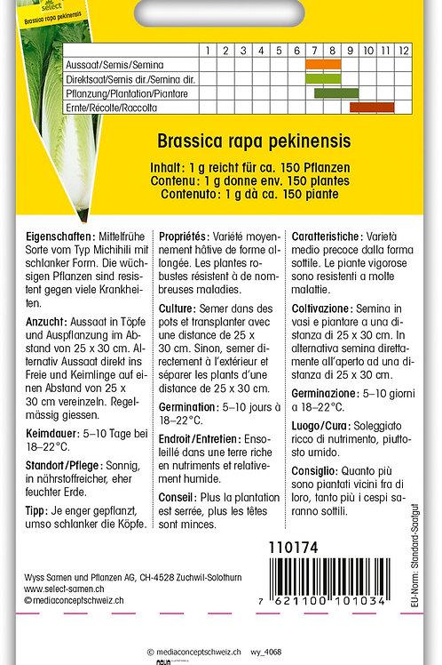 Chinakohl 'Michihili' - Brassica rapa pekinensis