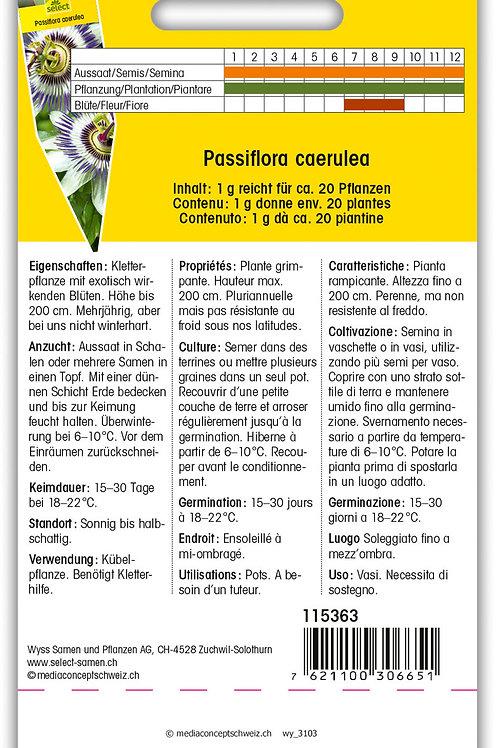 Passionsblume - Passiflora caerulea