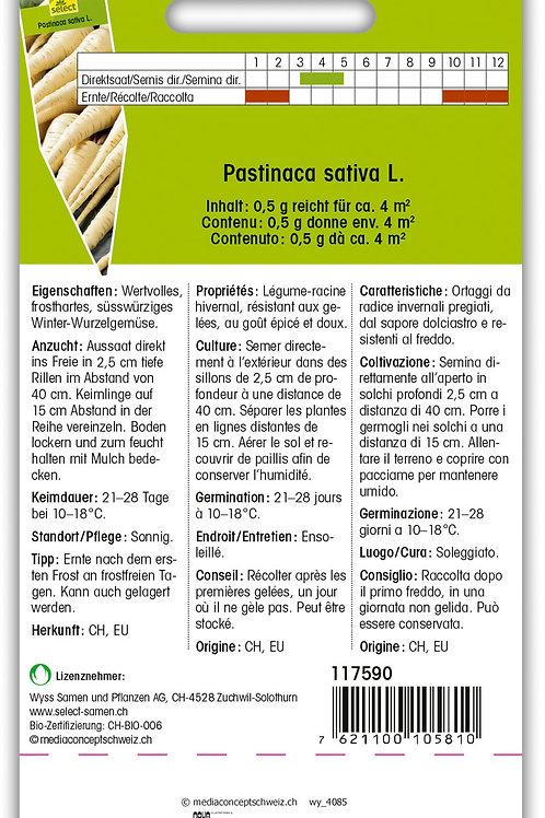 Pastinake 'de Guernesey' - Pastinaca sativa L.