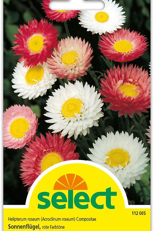 Sonnenflügel Mischung - Helipterum roseum
