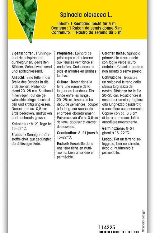 Spinat 'Butterblatt' - Spinacia oleracea