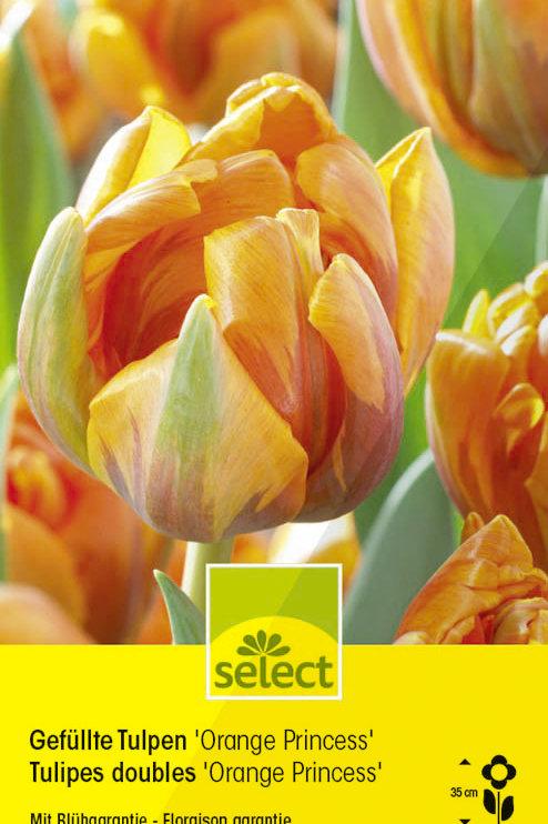 Gefüllte Tulpen 'Orange Princess' - Tulipa