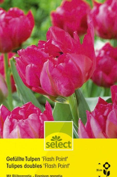 Gefüllte Tulpen 'Flash Point'