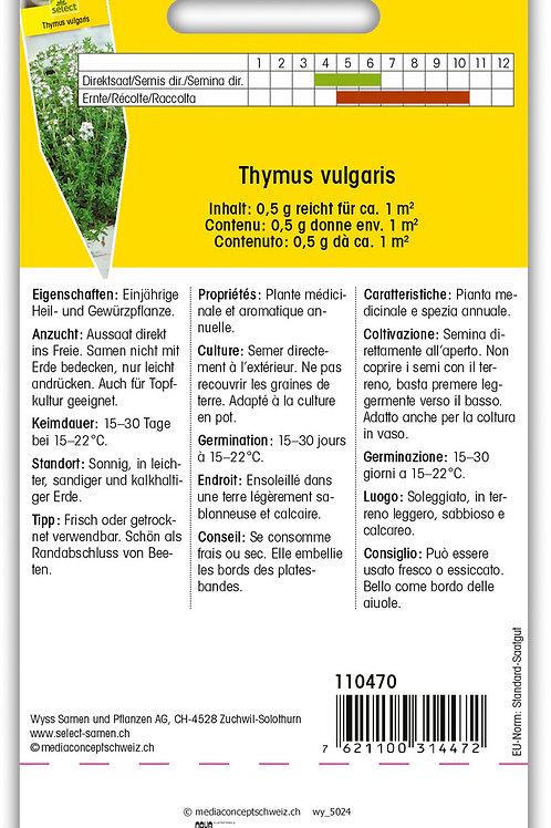 Thymian Sommer - Thymus vulgaris