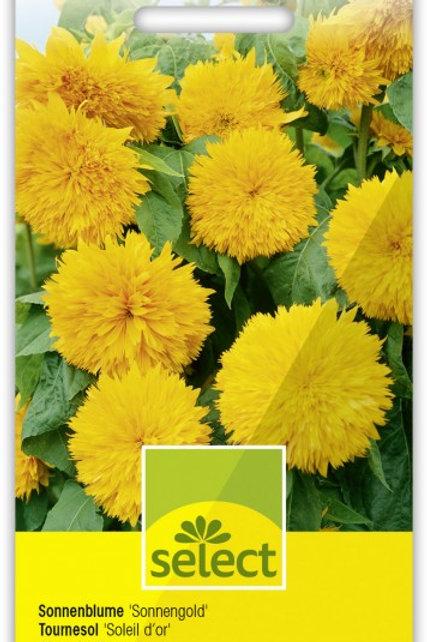 Sonnenblume 'Sonnengold'