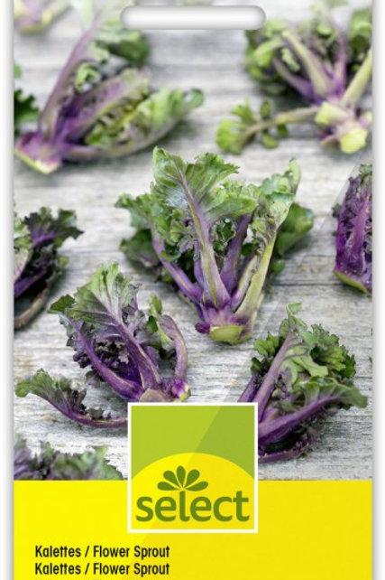 Kalettes / Flower Sprout