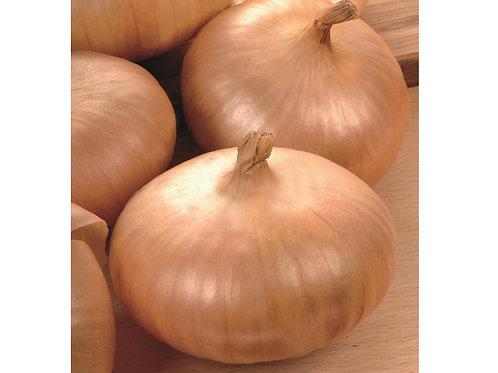 Steckzwiebel 'Presto', 250 g - Allium cepa