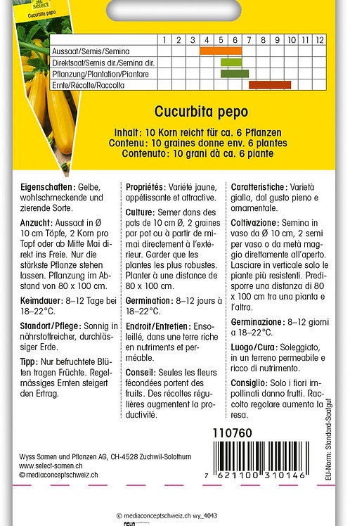 Zucchetti 'Golden' - Cucurbita pepo