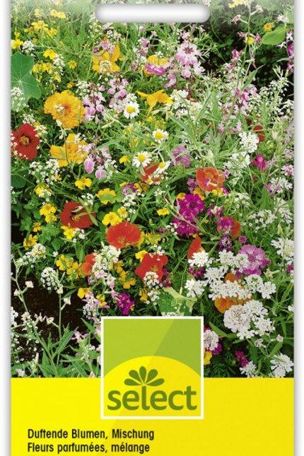Duftende Blumen, Mischung