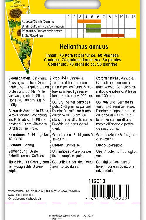 Sonnenblume 'Sonja' - Helianthus annuus