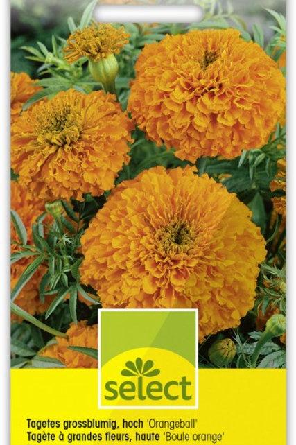 Tagetes grossblumig, hoch 'Orangeball'