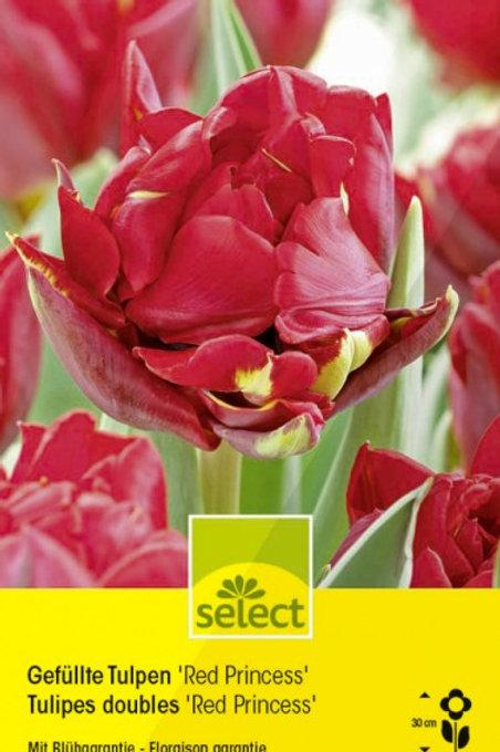 Gefüllte Tulpen 'Red Princess'