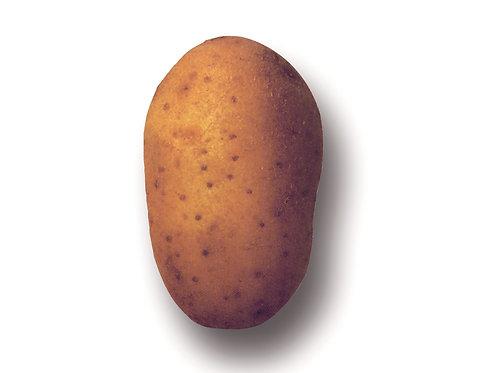 Saatkartoffeln 'Nicola', 2.5 kg