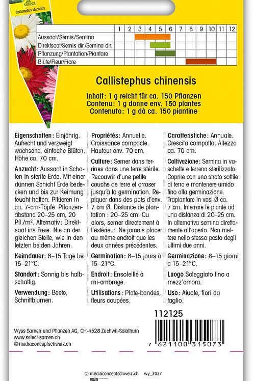 Sommeraster einfach - Callistephus chinensis