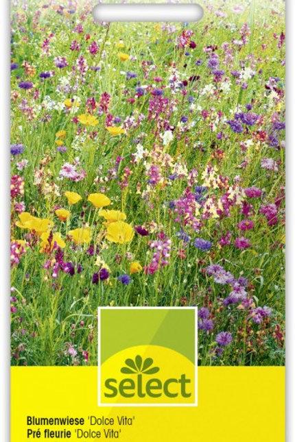 Blumenwiese 'Dolce Vita'
