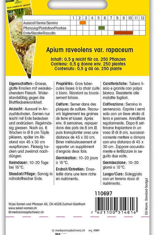 Knollensellerie 'Weisse Kugel' - Apium raveolens var. rapaceum