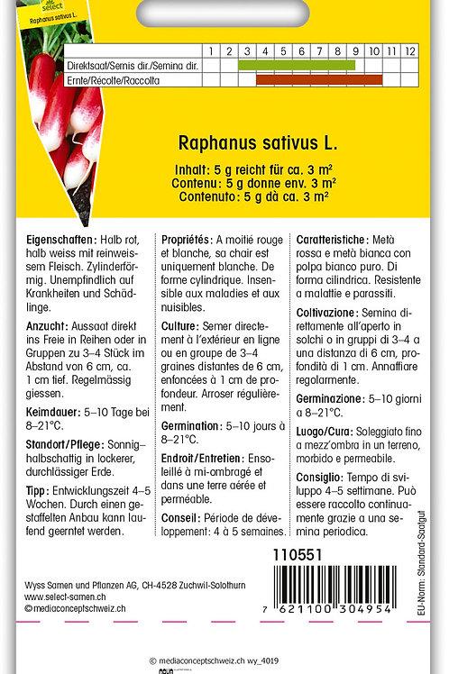 Radieschen 'Pernot' - Raphanus sativus
