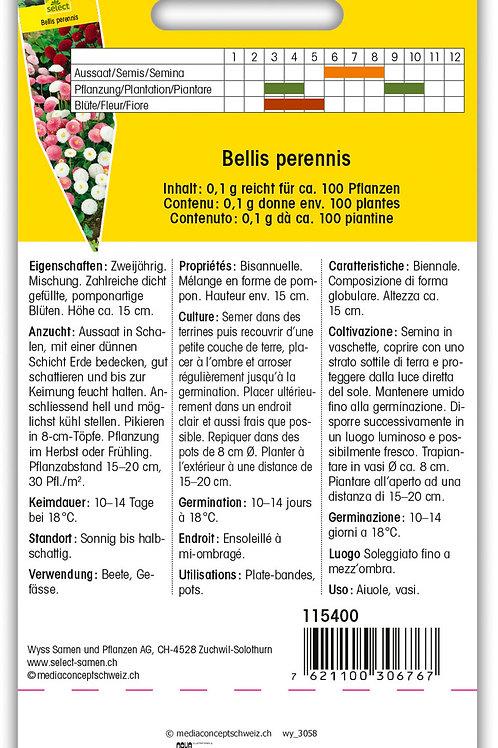 Gänseblümchen 'Pomponette' - Bellis perennis