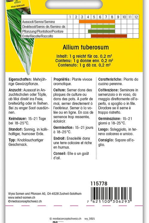 Schnittknoblauch 'Knobold' - Allium tuberosum