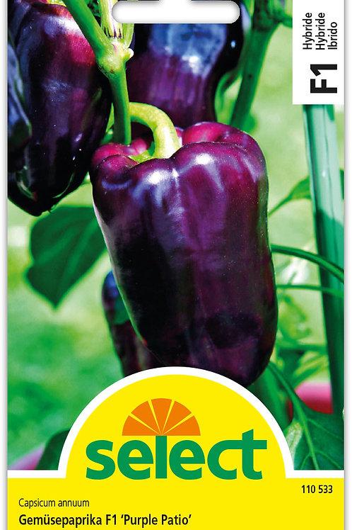 Gemüsepaprika F1 'Purple Patio' - Capsicum annuum