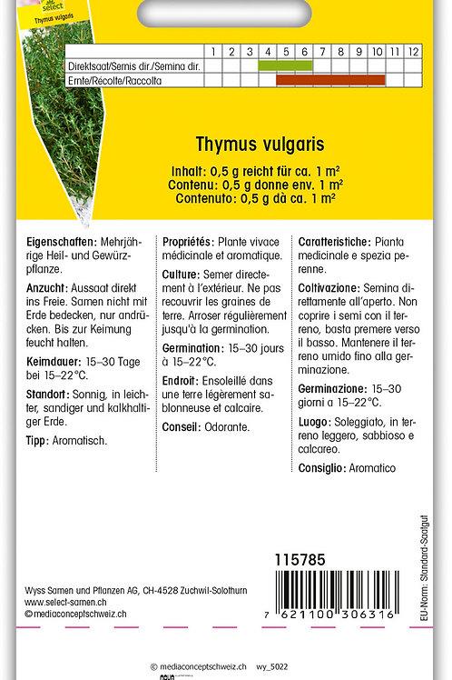 Thymian Winter - Thymus vulgaris